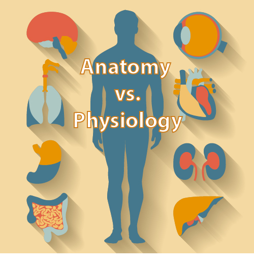 Difference between Anatomy and Physiology 1