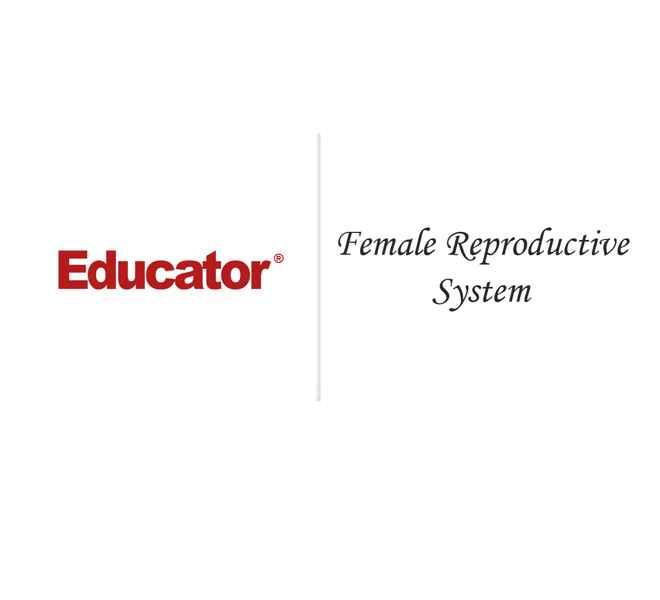 24. [Female Reproductive System] | Anatomy & Physiology | Educator.com