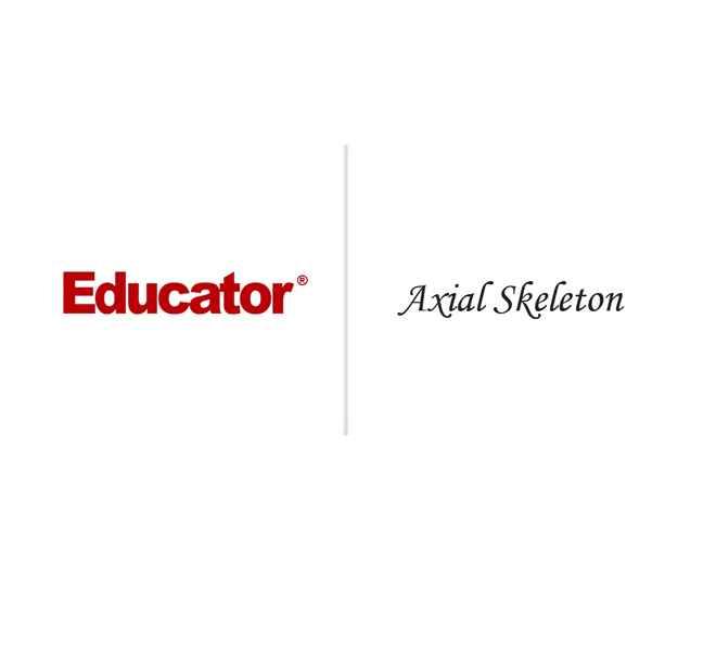 5 Axial Skeleton Anatomy Physiology Educator