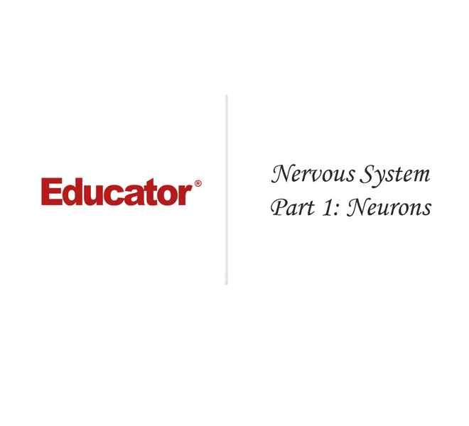9. [Nervous System Part I: Neurons] | Anatomy & Physiology ...